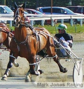 Brilliant pacer Saveapatrol in action at the Rangiora trials on Wednesday.