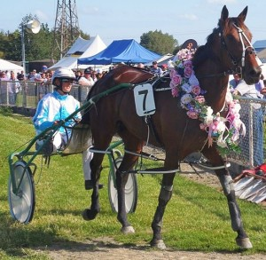 Rocker Band, after winning at Winton in 1:53.3 (1609m). Photo: Bruce Stewart, Southland Harness Racing.co.nz